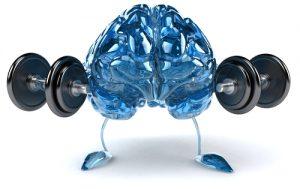 אימון למוח