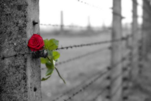 holocaust. shutterstock